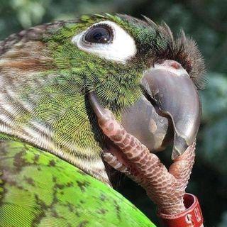 Protty profile picture
